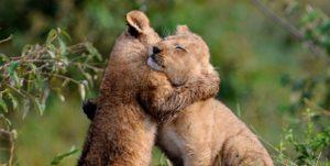 potere abbracci